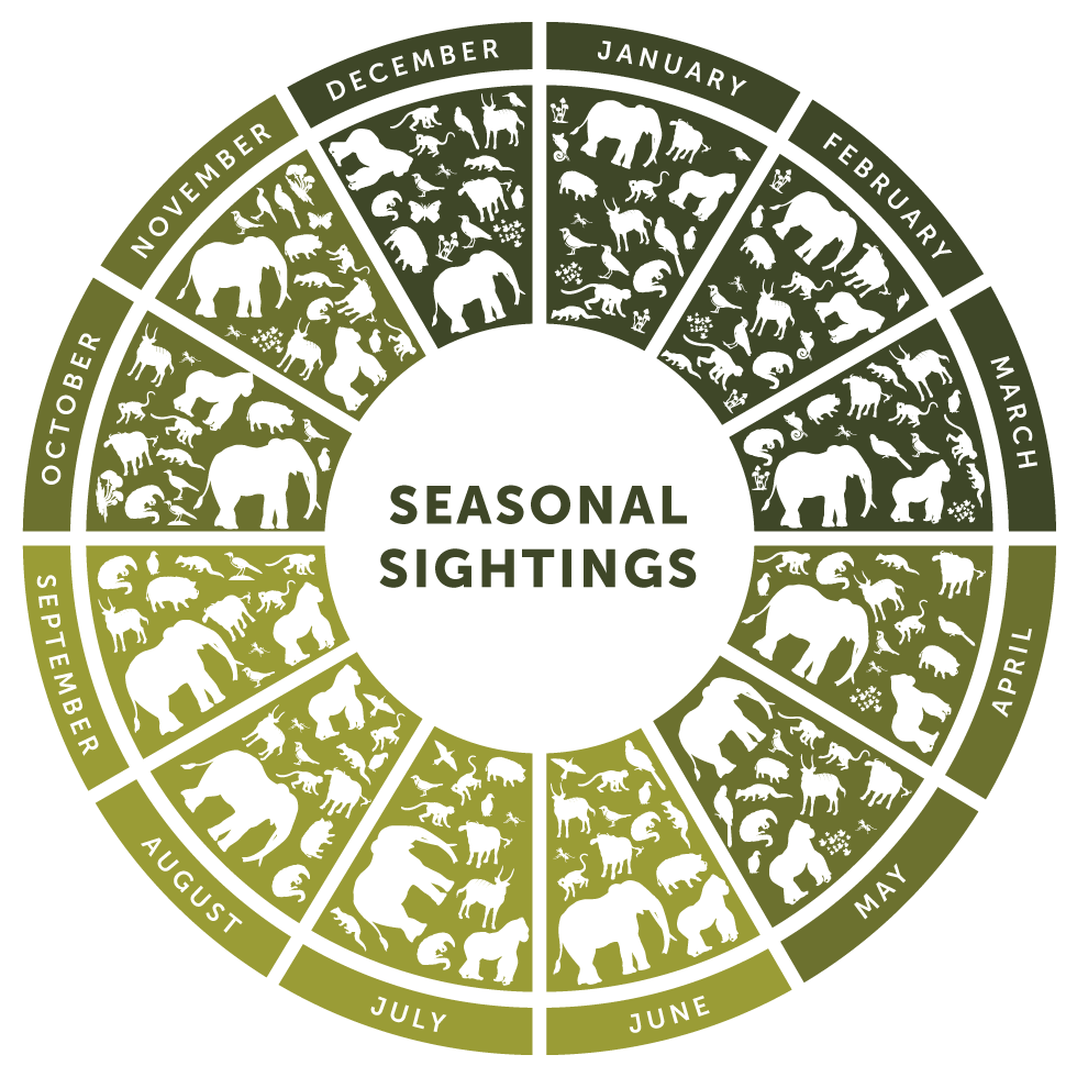 Seasonal Sightings – Sangha Trinational