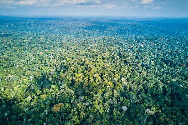 CCC-Ngaga-forest-aerial-2