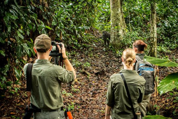 CCC-Ngaga-gorilla-guests