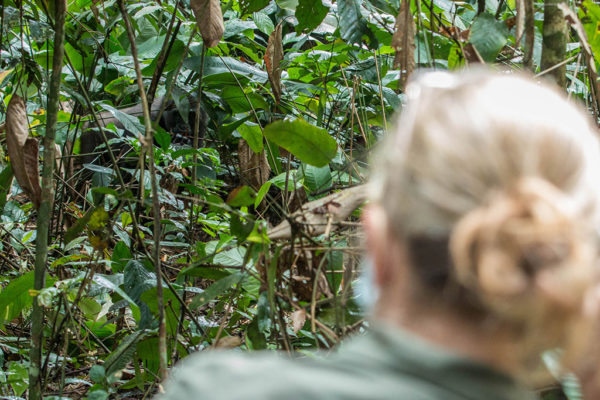 congo-conservation-company-gorilla-tracking-gallery-5