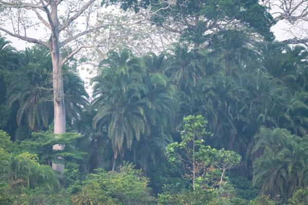 congo-conservation-company-lango-camp-exploring-the-bai