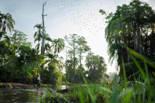 congo-conservation-company-lango-camp-exploring-the-bai-and-river