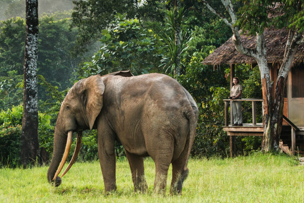 congo-conservation-company-mboko-camp-elephant-chalet