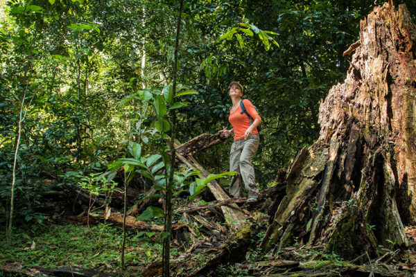 congo-conservation-company-mboko-camp-forest-walk