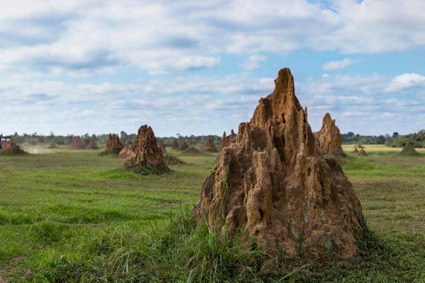 congo-conservation-company-mboko-camp-termite-mound